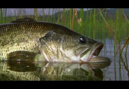 Alpine Bass – Bass Fly Fishing