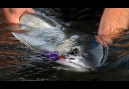Winter Run – Pacific Northwest Winter Steelhead