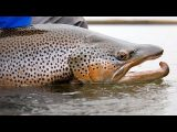 Río Grande Argentina Fly Fishing *TRAILER*