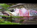 Aniak – Fly Fishing Alaska with Mouse Flies.